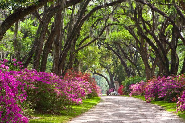 tree-covered-road_36017_600x450